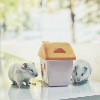 Hamsterlarımız