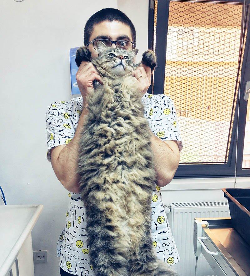 Diyafram Yırtığı Kedi