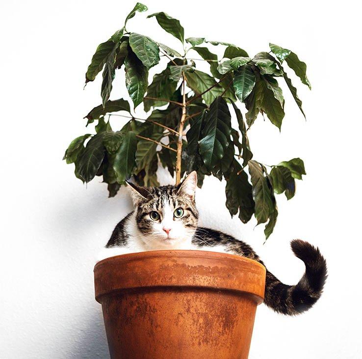 Kediler neden ot yer