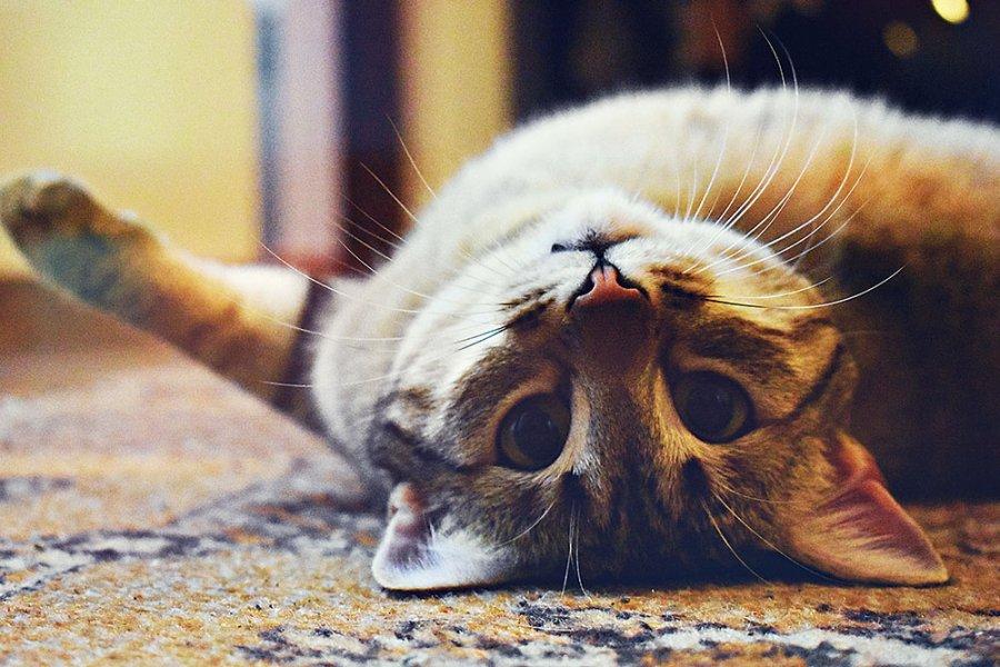 kedim kızgınlığa girdi ne yapmalıyım