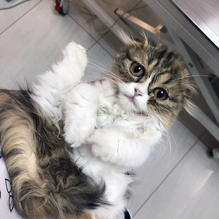 Yavru kedi sahiplendim ne yapmalıyım