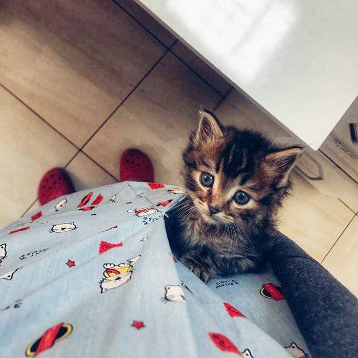 Kedi tüyü kist yapar mı