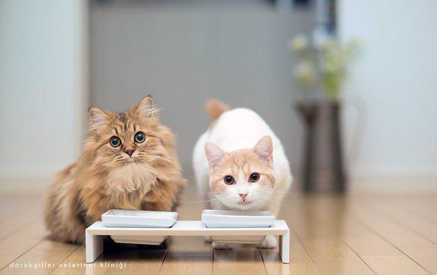 kediler kefir içer mi