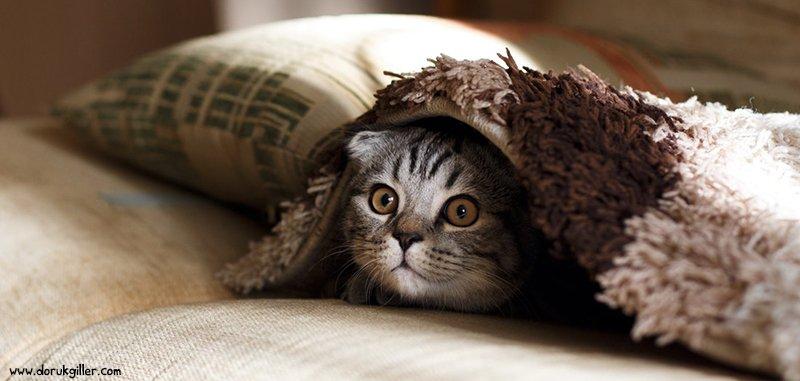 dişi kedi kısırlaştırma operasyonu fiyatı