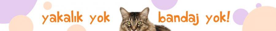 Dişi Kedi Kısırlaştırma Operasyonu ve fiyatları