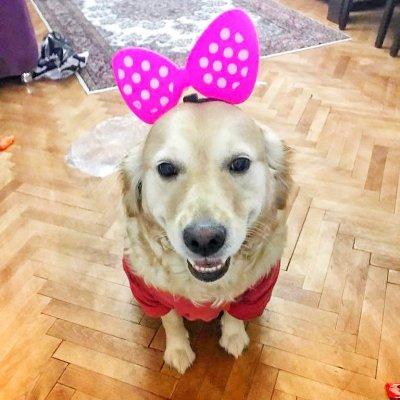 dişi köpek kısırlaştırma